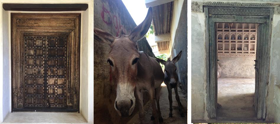 Donkeys-and-doors