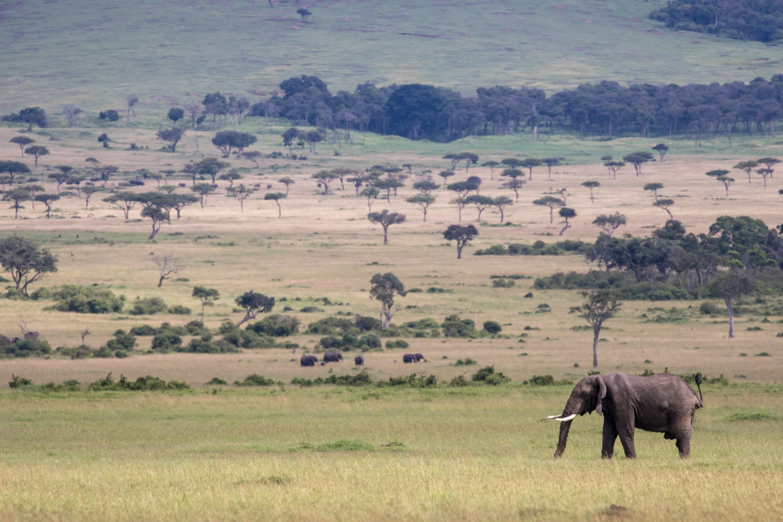 Elephant in front of Escarpment